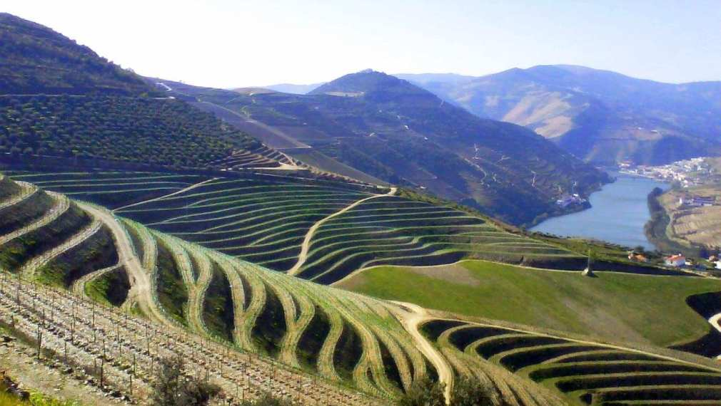Vineyards in Northern Portugal's Douro Valley