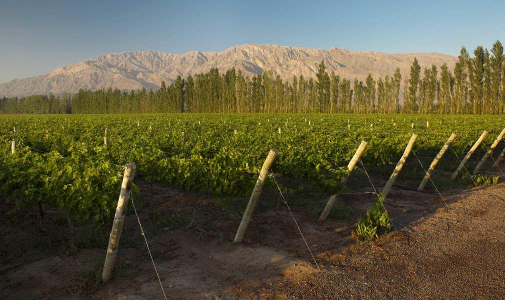 Argentina Mendoza Wine Destination