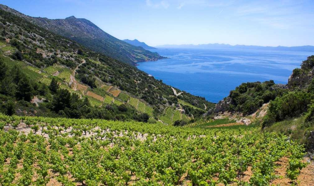 Croatia Coastal Dalmatia Wine Region