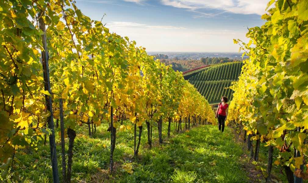 Germany Baden Wine Region