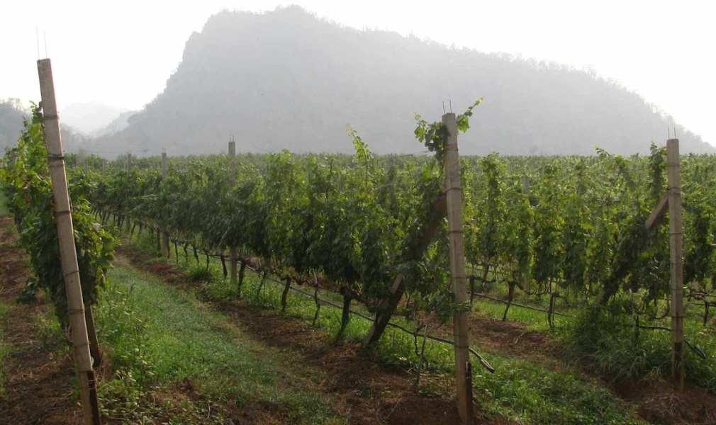 GranMonte Thailand Wine Destination
