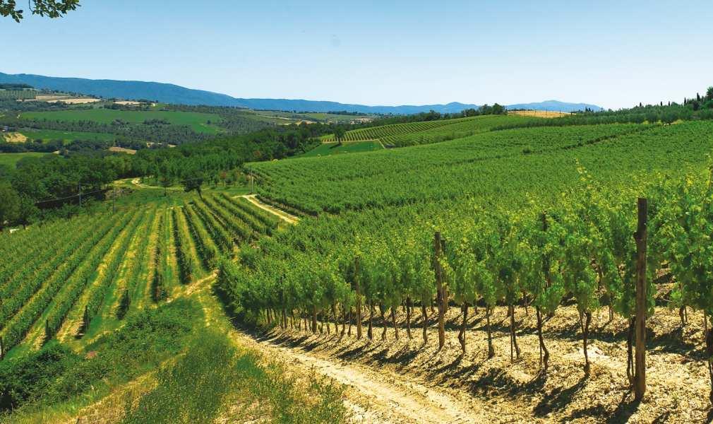 Italy Umbria Wine Region