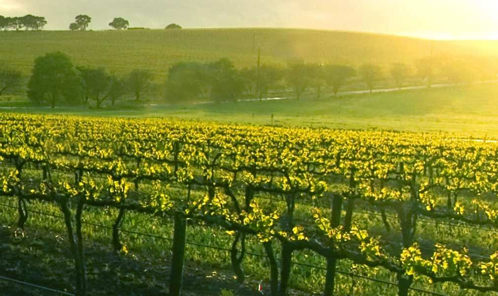 USA Texas Head to Hill Country wine region