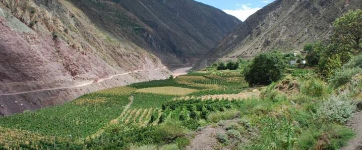 Vineyards in China
